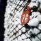 Παράδοση βάμβακος ως 31 Ιανουαρίου για να μη χαθεί η ειδική ενίσχυση
