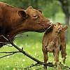 Μέγιστο πριμ 45 ευρώ στη βιολογική κτηνοτροφία